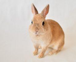 ウサギのスピリチュアル的な意味合い