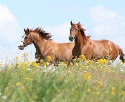 馬のスピリチュアル的な意味合い