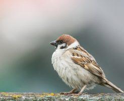 雀のスピリチュアル的な意味合い