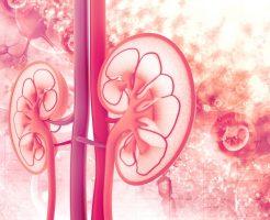 腎臓のスピリチュアル的な意味合い