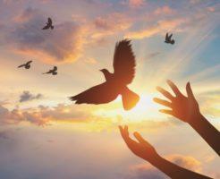 鳩に込められたスピリチュアルメッセージ