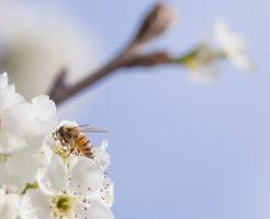 蜂が持つスピリチュアル的な意味合い