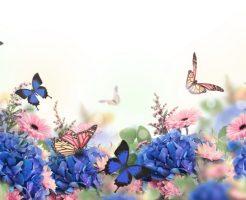 蝶と蛾のスピリチュアル的な意味合い