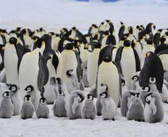 ペンギンのスピリチュアル的な意味合い