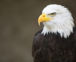 鷲(鷹)という存在に込められたスピリチュアル的な意味合い